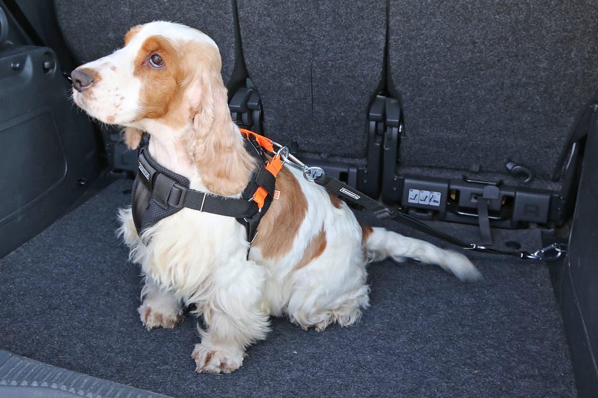 pasy bezpieczeństwa dla psa