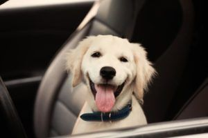 Maty samochodowe dla psa