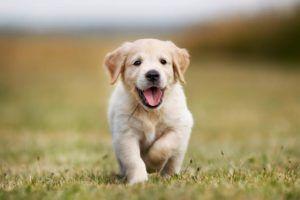 Wyprawka dla psa