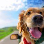 Letni wyjazd z psem