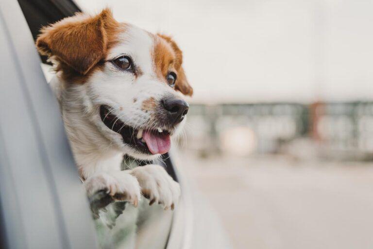 podróżowanie z psem
