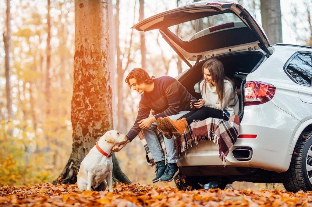 podroz psem samochodem kombi