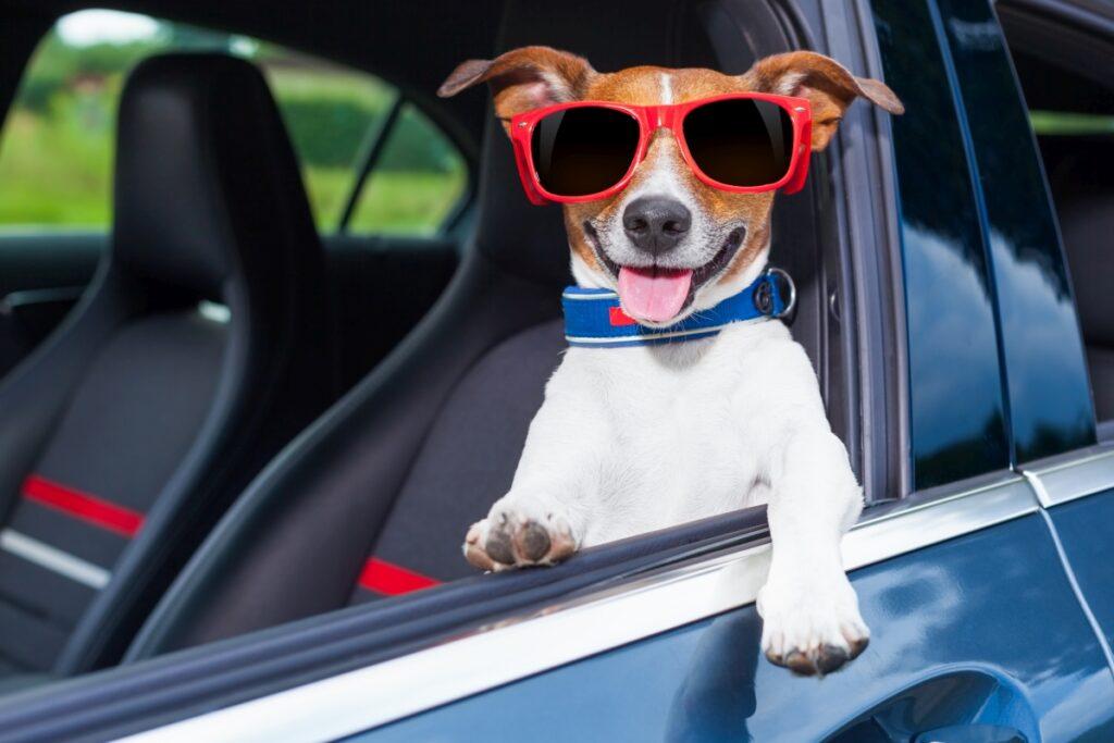 pies w podróży samochodem