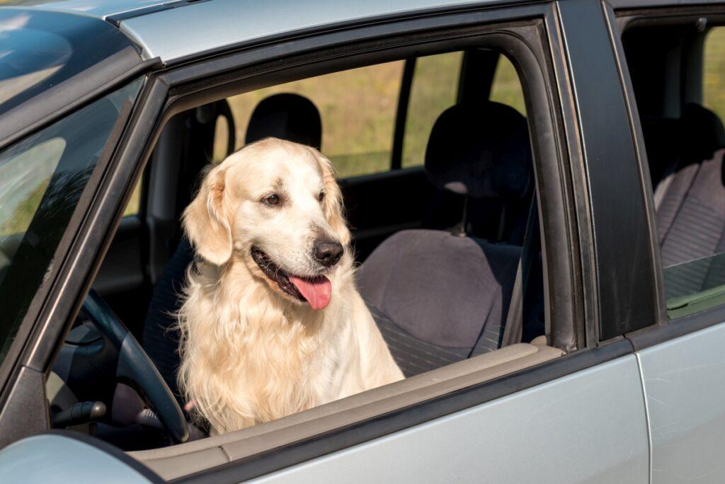podróżowanie z psem samochodem