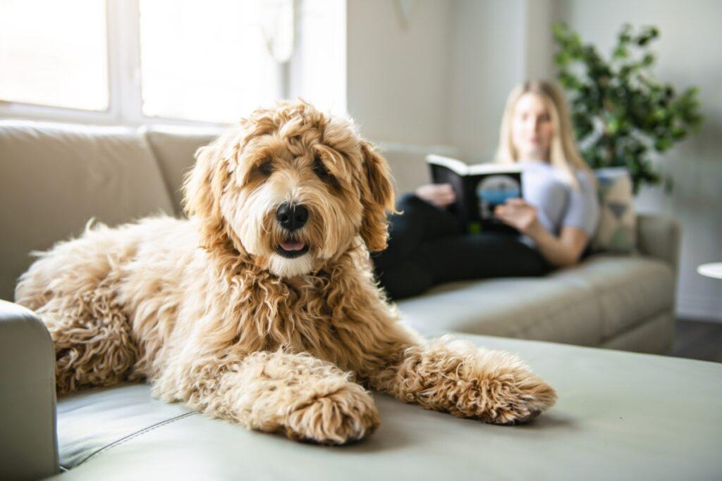 akcesoria dla psa