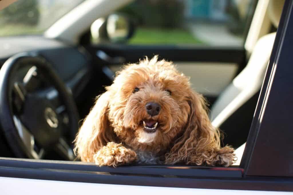 akcesoria do przewozu psa w samochodzie